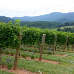 Charlottesville Food and Winery Getaway