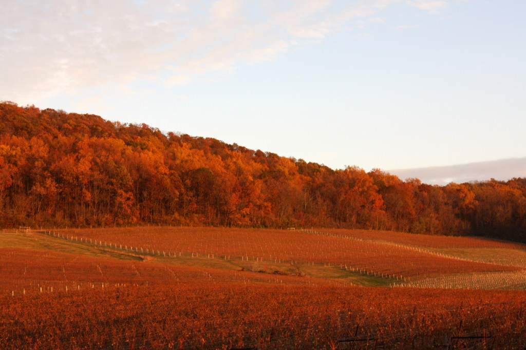 Breaux Vineyards. Fall, 2013