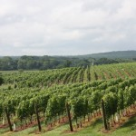 On the Road: Early Mountain and Barboursville Vineyards
